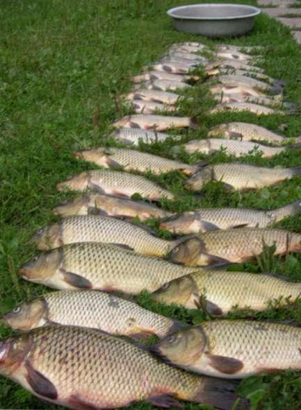 Рыбалка на карпа в тернопольской
